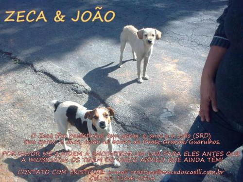 Zeca & João
